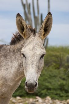 Free Donkey Stock Photo - 27372110