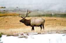 Free Bull Elk In The Mist Royalty Free Stock Photos - 27372508