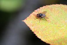 Free A Fly Enjoys The Warmth Of The Sun Royalty Free Stock Photos - 27376638