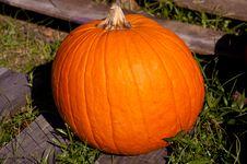 Free Single Pumpkin Royalty Free Stock Photo - 27377685