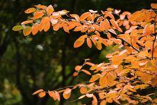 Free Autumn Leaves Royalty Free Stock Photos - 27378018