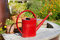 Free Red Watering Can Stock Photo - 27373770