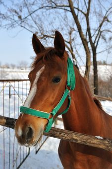 Free Brown Horse Royalty Free Stock Image - 27381186