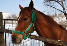Free Head Of Horse Stock Image - 27381201