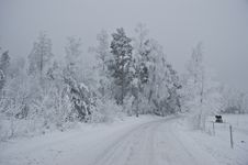 Free Winter Road Royalty Free Stock Photography - 27381397