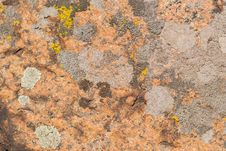 Free Red, Yellow And Grey Lichens Stock Photo - 27382510