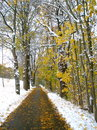 Free Autumn Snow Path Royalty Free Stock Image - 27393386