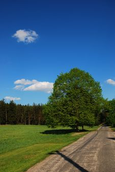 Free Spring Road Around The Tree Royalty Free Stock Images - 27390059