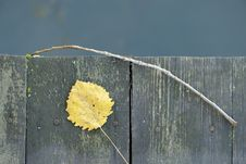 Free Old Wooden Fence With Yellow Leaf And Twig Royalty Free Stock Photo - 27390605