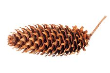 Free Spruce Cone Stock Image - 27390681