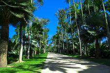 Free Caribbean Walk. The Beginning. Nong Nooch Garden Royalty Free Stock Images - 27390879