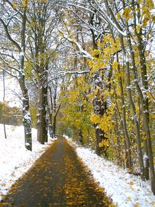 Free Autumn Snow Path Royalty Free Stock Image - 27393386