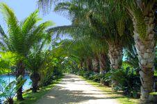 Free Caribbean Walk. The End. Nong Nooch Garden. Royalty Free Stock Photography - 27397697