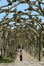 Free Woman Walking Thru The Trees Royalty Free Stock Photos - 2742748