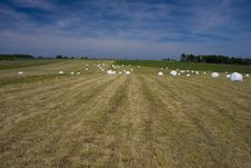 Sommer Landscape Royalty Free Stock Photos