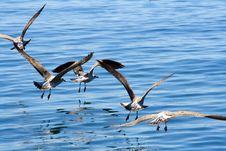 Free Seagulls Stock Photography - 2741262