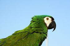 Free Parrots Royalty Free Stock Photography - 2742287