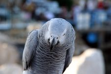 Free Parrots Royalty Free Stock Photos - 2742308