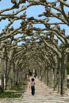 Woman Walking Thru The Trees Royalty Free Stock Photos