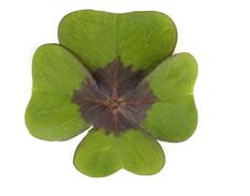 Free Four-leafed Clover Stock Image - 2743731