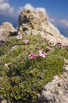 Flowers On The Peak Royalty Free Stock Images