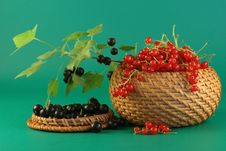 Free Red And Black Currant. Stock Photo - 2745650