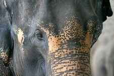 Free Elephant Head Royalty Free Stock Photography - 2745857