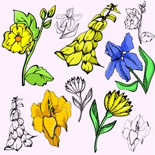 Flower Illustration Series Royalty Free Stock Photography