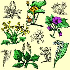 Flower Illustration Series Royalty Free Stock Images