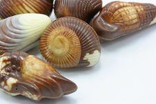 Close Up Of Mixed Chocolates Royalty Free Stock Photo