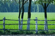 Free Green Grass Stock Photo - 2748810