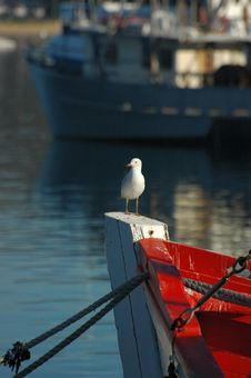 Free Sea Gull On Boat Prow Stock Photo - 2749050
