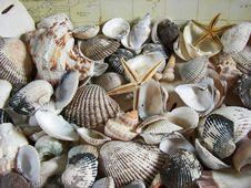 Free Sea Treasures Stock Photography - 2749872