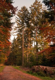 Free Autumn Forest Stock Photo - 27408250