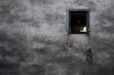 Free Window With A Flower On The Old Wall Royalty Free Stock Photos - 27408288
