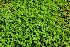 Free Green Clover Background Stock Images - 27409384