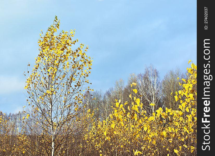 Last gold of autumn