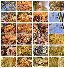Acorns And Trees Megaset Royalty Free Stock Photography