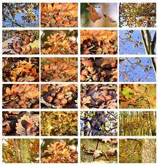 Acorns And Trees Megaset