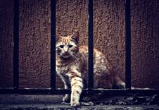 Free Cat Behind Fence Royalty Free Stock Image - 27420436