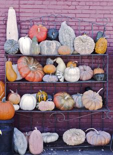 Free Pumpkins And Squash Royalty Free Stock Photo - 27425595