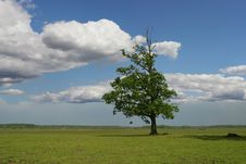 Free Tree On Green Field Royalty Free Stock Photography - 27427107