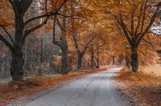Free Country Road Among Old Autumnal Oaks Royalty Free Stock Photos - 27427678