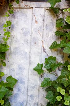 Ivy Covered Door Stock Photography