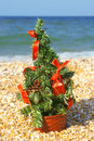 Free Christmas Tree On The Beach Royalty Free Stock Photo - 27434205