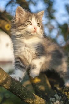 Free Kitty On Tree Stock Image - 27431311