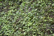 Free Moss Stock Images - 27434254