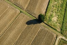 Free Lonely Tree Stock Image - 27439901