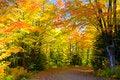 Free Road Foliage Stock Photography - 27449262