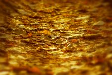 Free Setting Sun Rays On The Fallen Leaves Royalty Free Stock Photography - 27440427